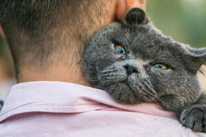 Purrfect Apps & Gear for the Crazy Cat Lover in Us All